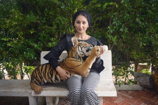 henna tiger
